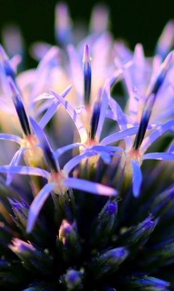 Pedicure en herborist met kennis